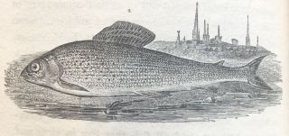 The Complete Angler...to Which are Added an Introductory Essay; The Linnan Arrangement of various River Fish Delineated in the Work...